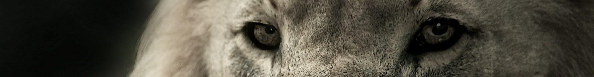 HC Trutnov — MOSTEČTÍ LVI